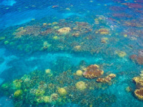 Maui Hawaii Vacation Coral Reef Snorkel Tour Olowalu