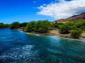 Maui Coral Reef Best Snorkel Tour Olowalu