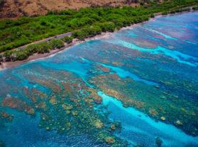 Best Maui Coral Reef Snorkel Tour Olowalu