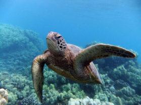 Best Snorkel Adventure Tour Location Turtle Town Maui